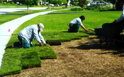 sod installation frisco