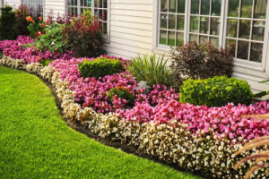 Frisco Landscaping