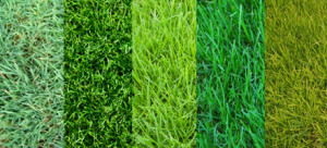 types of grass for north texas