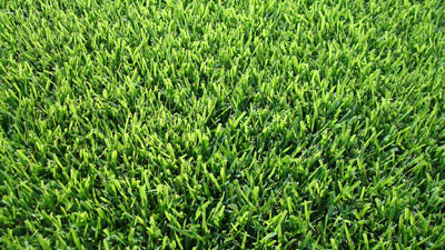palisades zoysia sod grass installed prices