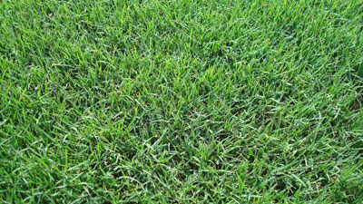 tifway 419 bermuda sod grass installed prices