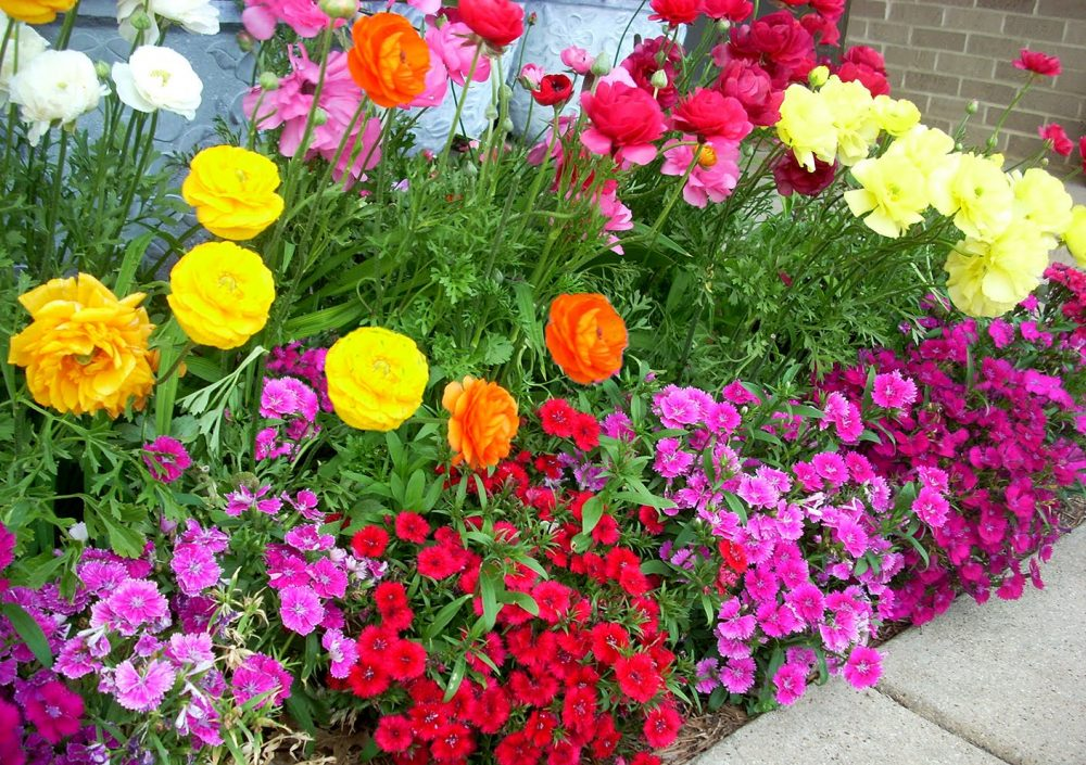 Best Summer Annual Flowers For Texas