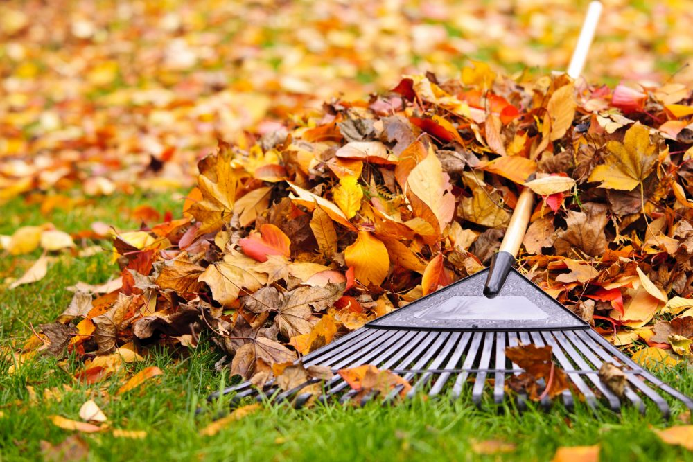 Fall, Lawn, Fall Lawn, Fall Lawn Care, Gardening, Landscaping