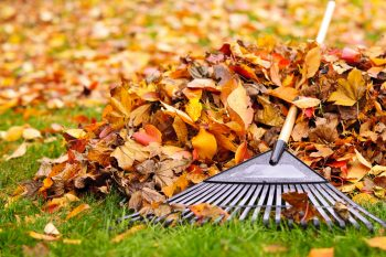Dried leaves, raking, mulching